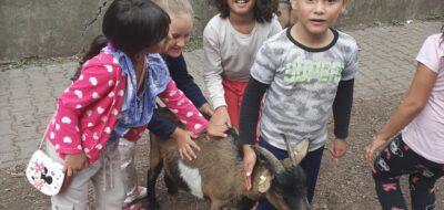 <a href='https://www.boscoostrava.cz/letni-vyprava-za-zviratky/' title='Letní výprava za zvířátky'>Letní výprava za zvířátky</a>